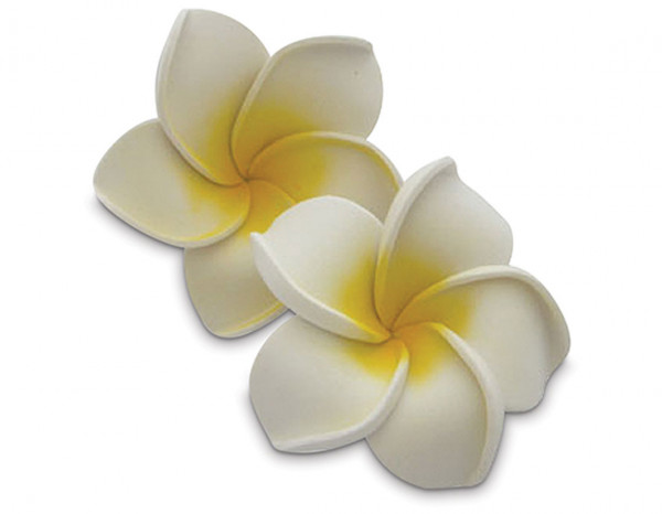 Floating frangipani flowers white (10)