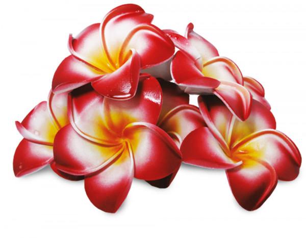 Floating frangipani flowers pink (10)